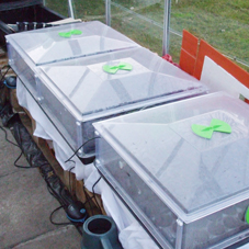 GS Vitopod propagators