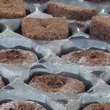 Jiffy Pellet & Root Riot Cubes