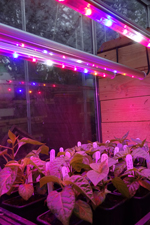 Grow Lights 3